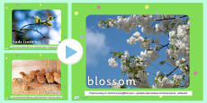 Spring Photo PowerPoint