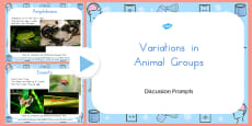 Australia - Animal Groups PowerPoint