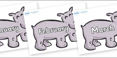 Months of the Year on Hippos