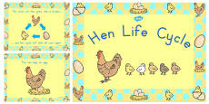 Australia - Chicken Life Cycle PowerPoint