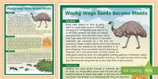 Wacky Ways Seeds Become Plants Display Poster