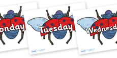 Days of the Week on Bad Tempered Ladybird to Support Teaching on The Bad Tempered Ladybird