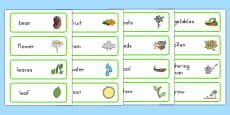 Growth Topic Word Cards (Australia)