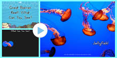 Australia - Great Barrier Reef 'What Can You See?' PowerPoint