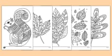Adult Colouring Autumn Themed Mindfulness Colouring Sheets
