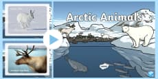 Arctic Animals Display Photo PowerPoint