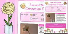 Carnation Colours Awe and Wonder Science Activity
