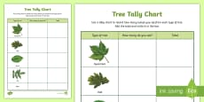 Tree Tally Chart Outdoor Activity