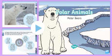 KS1 Polar Bear Fact File PowerPoint