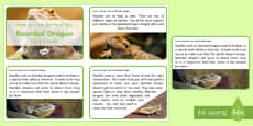 * NEW * How to Care for Your Pet Bearded Dragon Fact Cards