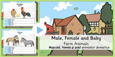 Male/Female Farm Animals and Their Young Names PowerPoint Romanian Translation