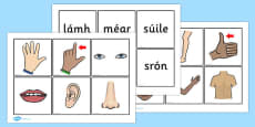 Parts of the Body Word and Picture Matching Cards Gaeilge