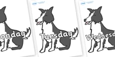 Days of the Week on Sheep Dogs