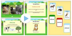 Identifică animalele erbivore, carnivore și omnivore - Prezentare PowerPoint