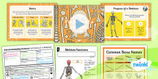 PlanIt - Science Year 3 - Animals Including Humans Lesson 5: Functions of a Skeleton Lesson Pack