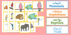 Animal Groups Sorting Cards Arabic/English