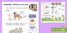 * NEW * KS1 How To Look after a Dog Differentiated Fact File
