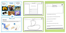 Slipper Project Design Make and Evaluate Teaching Pack