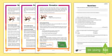 * NEW * KS2 Ramadan Differentiated Reading Comprehension Activity