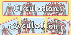 Circulation Display Banner