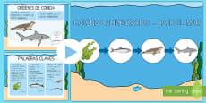 Presentación: Las cadenas alimentarias - Bajo el mar