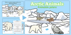 Winter Arctic Animals Habitat PowerPoint Romanian Translation