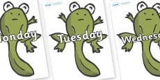 Days of the Week on Froglets