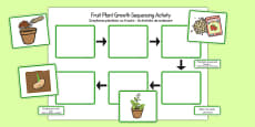 Plant Growth Sequencing Activity Romanian Translation