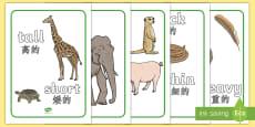 Size Comparison Display Posters English/Mandarin Chinese