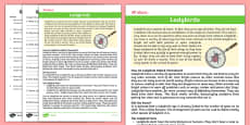 Ladybird Differentiated Reading Comprehension Activity