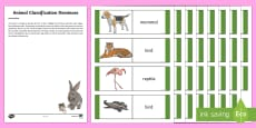 CfE Animal Classification Dominoes