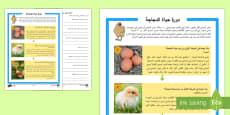دورة حياة الدجاجة نشاط للفهم القرائي