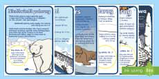 Plakaty z faktami o zwierzętach polarnych