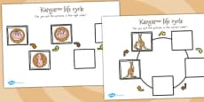 Australia - Kangaroo Life Cycle Worksheets