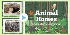Animal Homes PowerPoint Romanian Translation