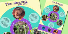 Mammal Life Cycle Display Poster