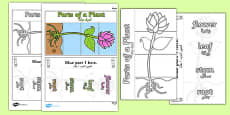 Parts of a Plant Foldable Interactive Visual Aid Template Arabic Translation