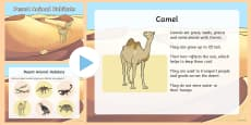 Desert Animal Habitats PowerPoint