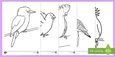 Australian Birds Colouring Pages