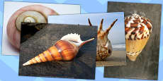 Shells Photo Pack