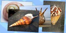 Shells Photo Pack
