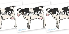 Months of the Year on Cows