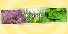 Plants Photo Display Banner