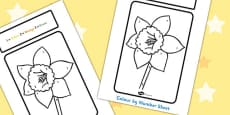 Daffodil Colour By Number Sheet