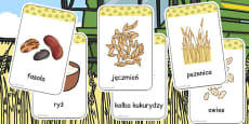 Harvest Grains Flash Cards Polish