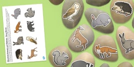 Woodland Animals and Habitats Story Stone Image Cut Outs