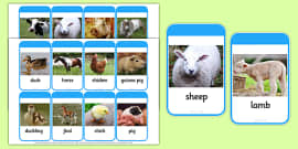 Mothers and their Young Farm Animals Photo Flash Cards