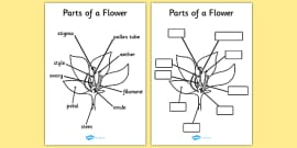 Parts of a Plant and Flower Reference Sheet and Labelling Worksheet