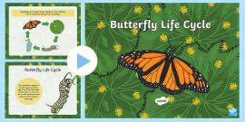 * NEW * Life Cycle of a Butterfly PowerPoint
