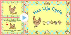 Hen Life Cycle PowerPoint